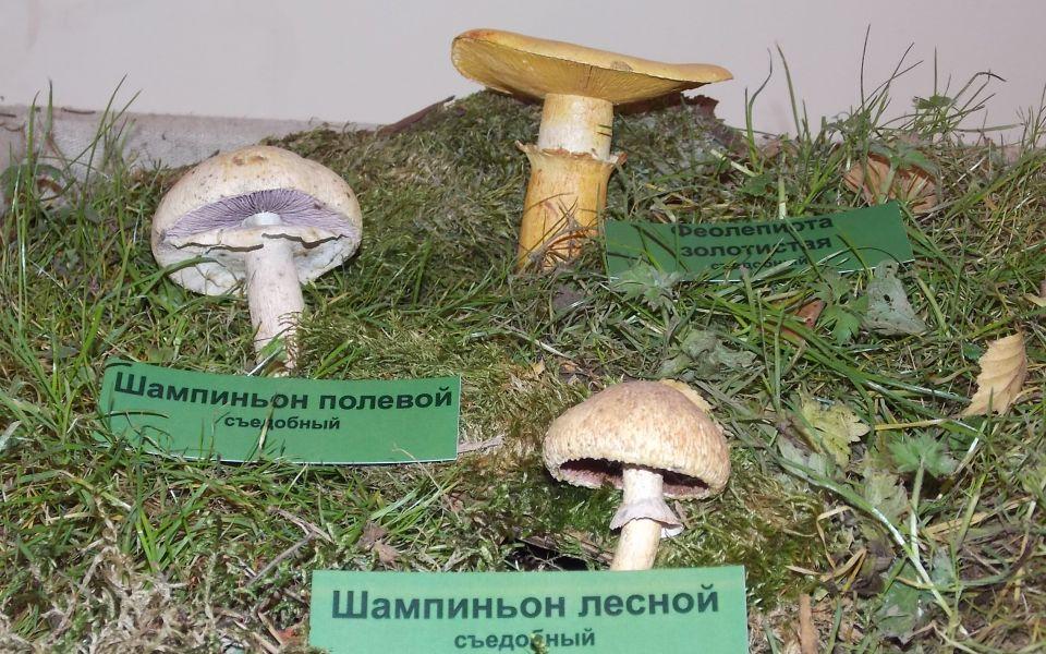 Муляжи грибов, вполненные Анатолием Манавым