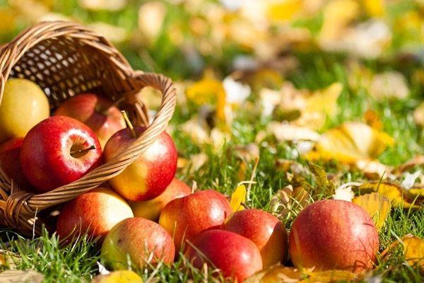 Яблочный спас во Флёново
