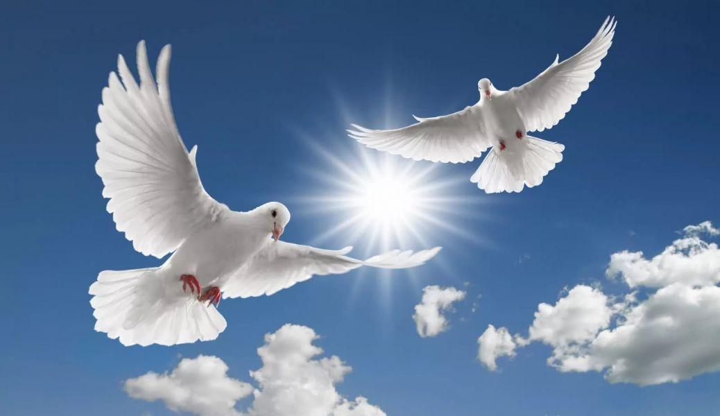 Массовый запуск белых голубей