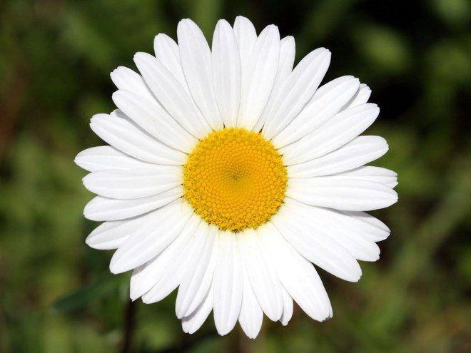 Акция «Белый цветок» Смоленск