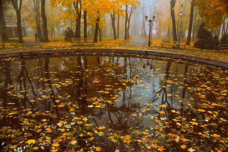 Автор: Александр Казимиров