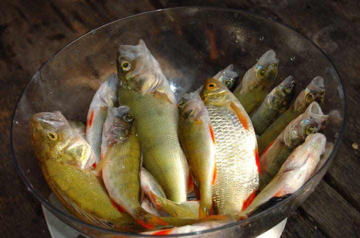 озеро астрогань смоленск рыбалка